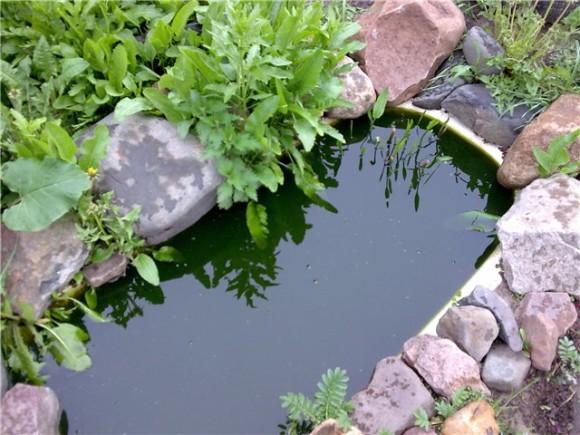 Пруд из ванны на даче своими руками (фото)